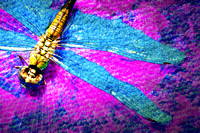 Dragonfly On the Magenta Diagonal